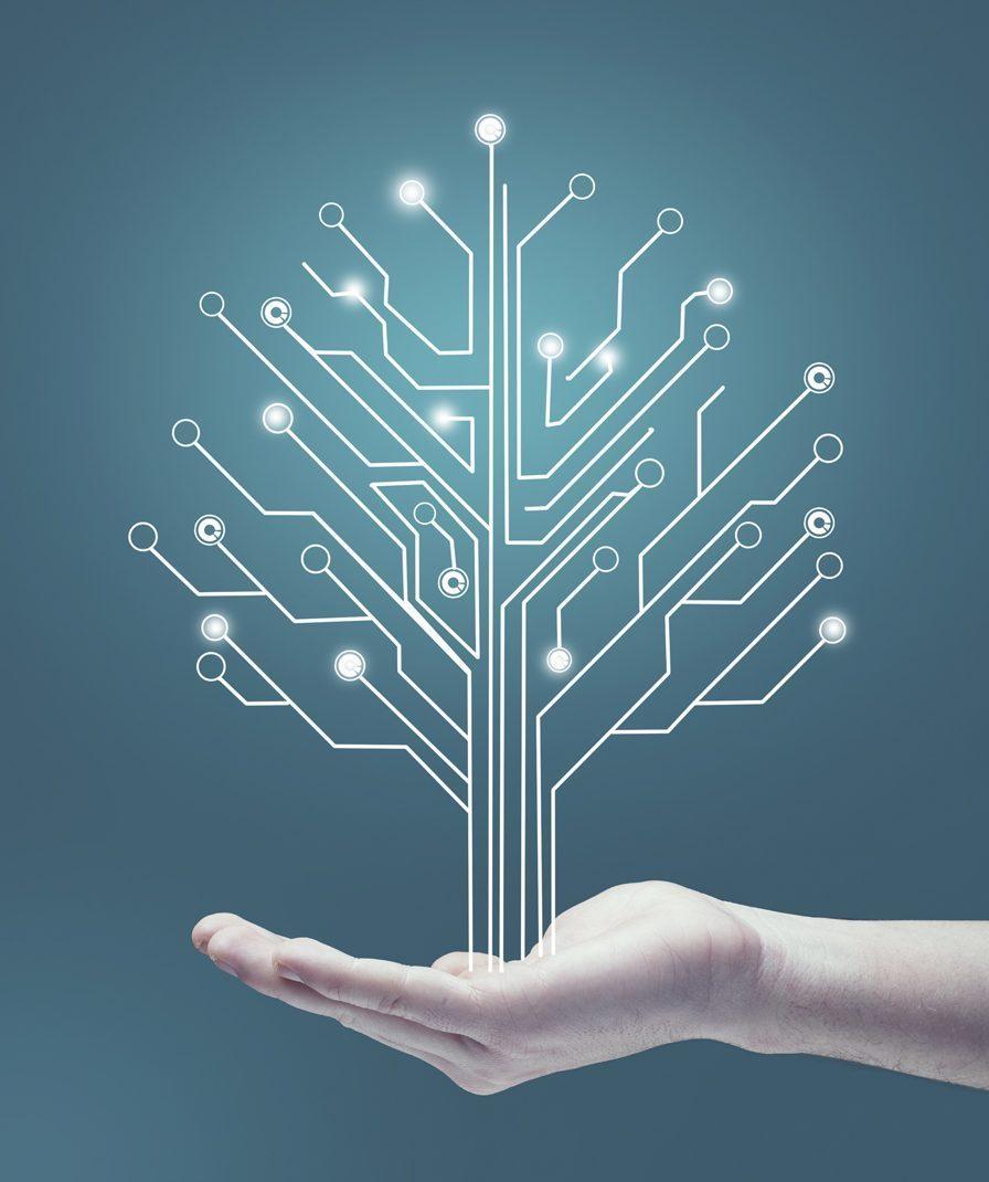 SAP Development services, Affluent